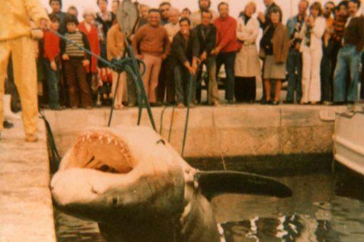 Tiburones en Mallorca