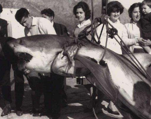 Sharks in Mallorca